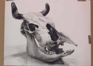 Bone-of-cattle
